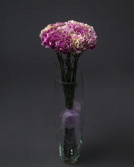 15 Малиново-розовых Гвоздик