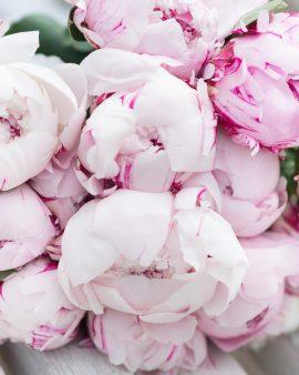 21 Розовый Пион