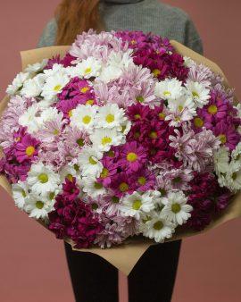 31 Бело-Розовая Хризантема
