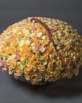 501 Разноцветная Роза