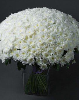 65 Белых Хризантем Кустовых