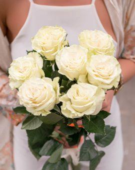 7 Белых Роз Эквадор (60 см.)